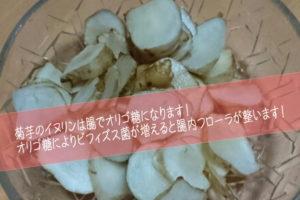 イヌリンが多く含まれる「天然の菊芋」を食べてする腸内フローラの改善